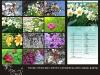 koledar Rože 2012